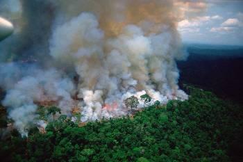 Τεράστια οικολογική καταστροφή στον «πνεύμονα» της Γης