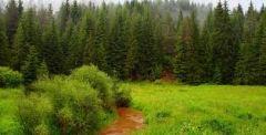 ΟΣΕΑΔΕ:Παράταση συμβάσεων και μονιμοποίηση εργαζομένων στις δασικές υπηρεσίες