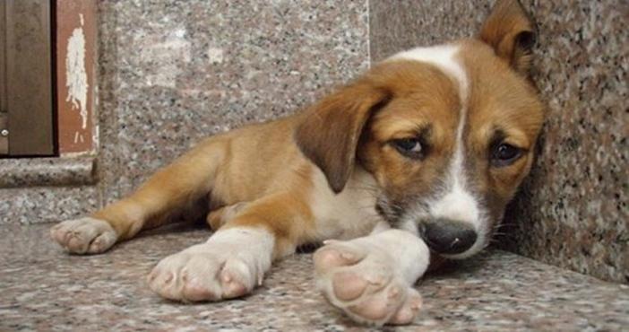 «Ψίχουλα» από το Υπουργείο Αγροτικής Ανάπτυξης για την φροντίδα των αδέσποτων ζώων
