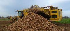 Χορήγηση της συνδεδεμένης ενίσχυσης στους παραγωγούς ζαχαροτεύτλων