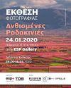 Οι Ανθισμένες Ροδακινιές της Βέροιας ταξιδεύουν στη Θεσσαλονίκη!