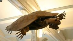 ΠΑΛΑΙΟΝΤΟΛΟΓΙΑ: Ανακαλύφθηκαν απολιθώματα γιγάντιας χελώνας με μέγεθος αυτοκινήτου