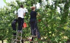 Σύσκεψη στη «νομαρχία» για το θέμα των Αλβανών εργατών γης