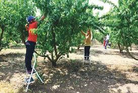 ΕΡΓΑΤΙΚΟ ΚΕΝΤΡΟ ΝΑΟΥΣΑΣ : Για τους εργάτες γης
