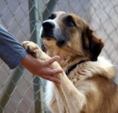 Δήμος Βέροιας: Για την Παγκόσμια Ημέρα των Ζώων