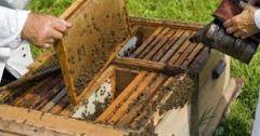 Π.Ε Ημαθίας: Μέχρι τις 31 Δεκεμβρίου  2020 οι αιτήσεις για δήλωση κατεχομένων κυψελών μελισσοσμηνών  (διαχείμαση)