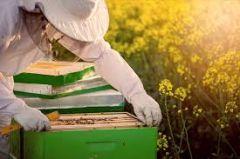 Π.Ε Ημαθίας: Συμμετοχή στο πρόγραμμα βελτίωσης των συνθηκών παραγωγής και εμπορίας των προϊόντων μελισσοκομίας για το έτος 2021.