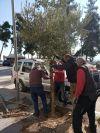 Φυτεύσεις δέντρων σε κεντρικά σημεία της Βέροιας