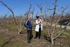 Φρόσω Καρασαρλίδου: «Άμεση ικανοποίηση των αιτημάτων των αγροτικών φορέων για τις ζημιές από τον παγετό»