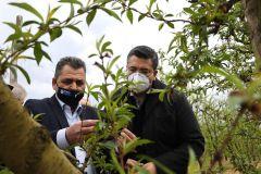 Πληγείσες από τον παγετό περιοχές της Ημαθίας και της Πέλλας επισκέφτηκε ο Περιφερειάρχης Κεντρικής Μακεδονίας Απόστολος Τζιτζικώστας