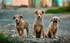 Ξεκινάει το πρόγραμμα εθελοντικών στειρώσεων αδέσποτων ζώων συντροφιάς στον Δήμο Βέροιας