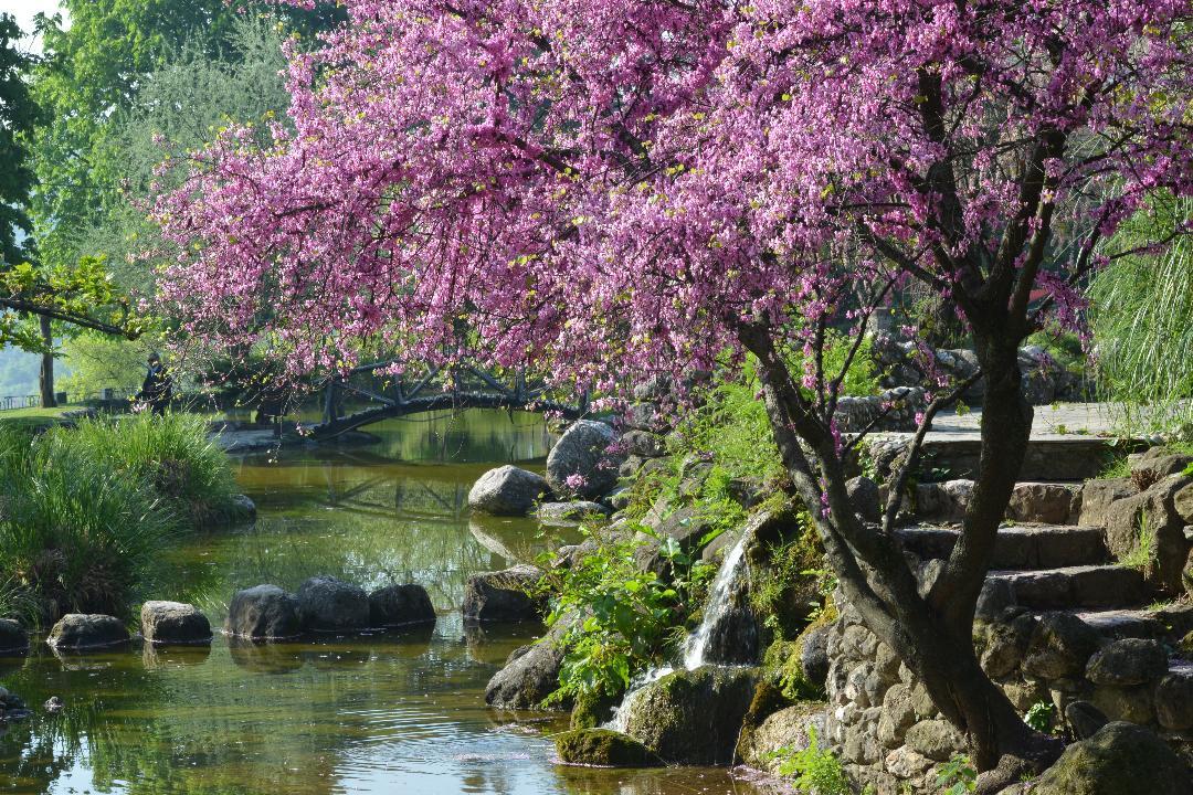 Στην Ευρωπαϊκή Διαδρομή Ιστορικών Κήπων του Συμβουλίου της Ευρώπης εντάχθηκε το Δημοτικό Πάρκο Νάουσας