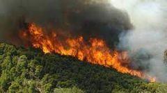 Αύξηση 300% καμένων εκτάσεων και 160% δασικών πυρκαγιών το 2021, μέχρι στιγμής!