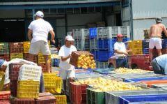 ΡΟΔΑΚΙΝΟΠΑΡΑΓΩΓΟΙ: Πουλούν κοψοχρονιά τον κόπο τους σε βιομήχανους και εμπόρους