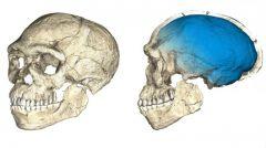 ΜΑΡΟΚΟ: Βρέθηκαν τα παλαιότερα μέχρι σήμερα απολιθώματα του Homo sapiens