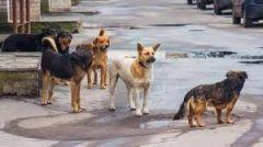 Δήμος Βέροιας: Συνεχίζονται και εντείνονται οι προσπάθειες περισυλλογής με σκοπό την διαχείριση των αδέσποτων σκύλων