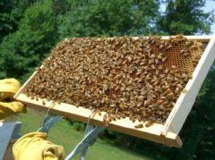Αίτηση διαχείμασης κυψελών και συμμετοχή των μελισσοκόμων της Ημαθίας σε ενισχυτικές δράσεις