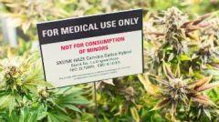 Εωλα και επικίνδυνα κυβερνητικά επιχειρήματα για την «ιατρική» κάνναβη