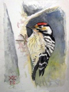 ΠΕΡΙΔΙΑΒΑΙΝΟΝΤΑΣ ΤΗΝ «Πολιτεία των πουλιών» : Ελάχιστη αναφορά στην έκθεση ζωγραφικής…και όχι μόνο  των Χ. Κουρουζίδη, Α.Χολέβα