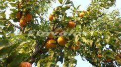 Ο ΕΛΓΑ αποφασίζει για το αίτιο ζημιάς αλλά και για τις καλλιέργειες που πλήττονται
