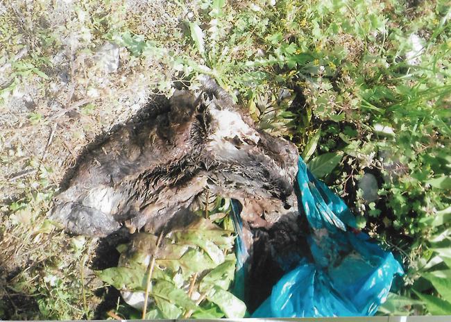 Τηρεί το Νόμο ο Δήμος Βέροιας για τα αδέσποτα ζώα;