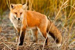 Ημαθία: Σε ποιες περιοχές θα πέσουν εμβόλια και δολώματα  κατά της λύσσας