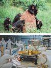 Πώς ο άνθρωπος εξελίχθηκε σε ανώτερο είδος ζώου
