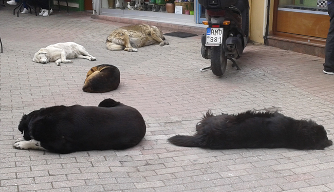 «Σκυλίσια μέρα»