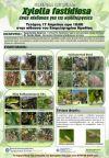 Ημερίδα για το βακτήριο xylella fastidiosa στη Βέροια
